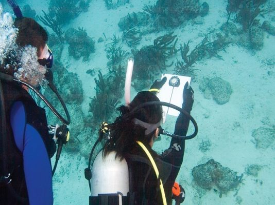دوره ناوبری در زیر آب